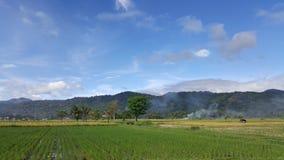 Hijaunya stock photography