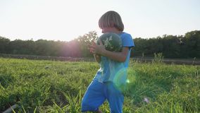 Hijo del ` s del granjero que cosecha la cosecha de la sandía en el campo de la granja orgánica almacen de metraje de vídeo