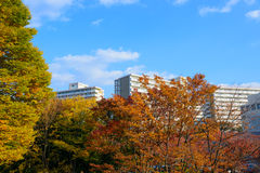 Hikarigaoka park in autumn in Tokyo Stock Photo