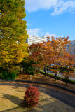 Hikarigaoka-Park im Herbst in Tokyo Lizenzfreie Stockbilder