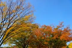 Hikarigaokapark in de herfst in Tokyo Stock Afbeelding
