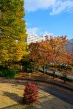 Hikarigaokapark in de herfst in Tokyo Royalty-vrije Stock Afbeeldingen