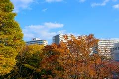 Hikarigaokapark in de herfst in Tokyo Stock Foto