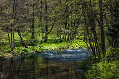 A hike in Altensteig, in the northern black forrest in the early spring. Along the river Nagold Royalty Free Stock Images