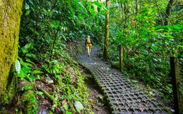 Hike in Costa Rica. Hiking in green tropical jungle, Costa Rica, Central America Stock Images