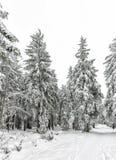 Hike do inverno Foto de Stock