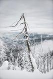 Hike do inverno Fotografia de Stock Royalty Free