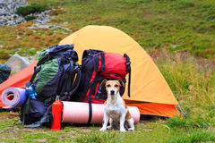 In a hike with the dog. True friend. Series of photos. Dog camping. Horizontal. Series of photos Royalty Free Stock Photography