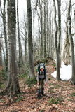 Hike in forest Stock Photography