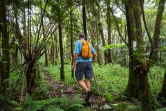 Hike in jungle. Hike in the Hawaiian jungles Stock Images
