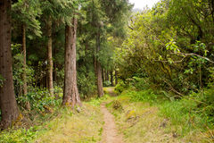 Hike In Reunion Island Royalty Free Stock Image