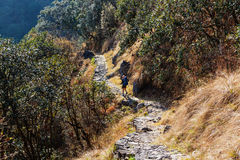 Hike in Nepal jungle Stock Photos