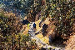 Hike in Nepal jungle Stock Images
