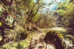 Hike in Nepal jungle Royalty Free Stock Images