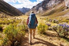 Hike in Peru. Hiking scene in Cordillera mountains, Peru stock images