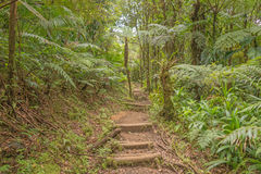 Hike in the rainforest of Dominica. Hike to Boiling Lake in the rainforest of Dominica stock photography