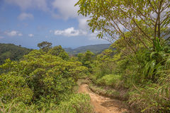 Hike in the rainforest of Dominica Royalty Free Stock Images