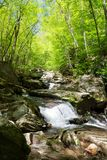 A hike to Crab Orchard Falls through the forest. royalty free stock photo