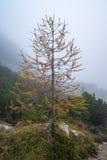 Hike from Vršič. To the beautiful Slemenova Špica in Juian Alps Stock Image