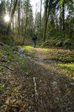 Hike in the woods. I took this image up on Cougar Mountain, WA Royalty Free Stock Image
