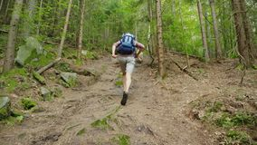 In a hike with your favorite dog. A man with a backpack runs after his pet on a forest path. Steadicam shot stock footage
