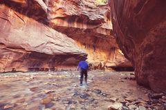 Hike in Zion Royalty Free Stock Images