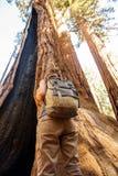 Hiker в национальном парке секвойи в Калифорния, США стоковая фотография