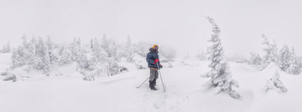 Hiker в покрытом снег лесе Стоковое фото RF
