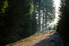 Hiker женщины идя на дорогу горы, греет на солнце светить Стоковое Изображение RF