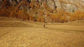 Hiker женщины идя на падение fields путь около деревьев Взгляд со стороны Солнечный день осени в природе красочного красного леса акции видеоматериалы