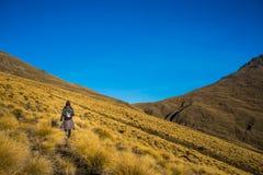 Hiker женщины идя на золотой луг tussock Стоковая Фотография