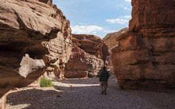 Hiker исследуя красный каньон в горах Eilat в Израиле стоковое фото