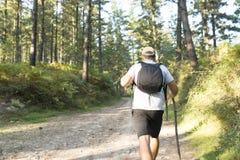 Hiker идя в лес стоковое изображение