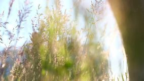 Hiker идя outdoors, конец низкого угла вверх ноги сток-видео