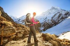 Hiker на треке в Гималаях, долине Annapurna Стоковые Фотографии RF