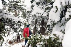 Hiker с рюкзаком в древесинах в зиме стоковая фотография rf