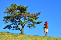 Hiker Admiring a Tree Stock Images