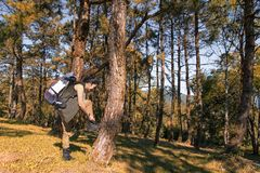 Hiker asian woman standing on forest autumn season. Traveler with backpack on hike in nature. Royalty Free Stock Image