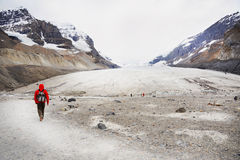 Hiker on Athabasca Glacier Royalty Free Stock Photos