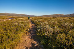 Hiker with backpack traveling in Norway mountains Dovrefjell Stock Photos