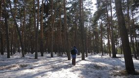 Hiker with backpack walking in the pine forest covered with deep snow. Winter activity and recreation concept. Hiker with backpack walking in the pine forest stock video footage