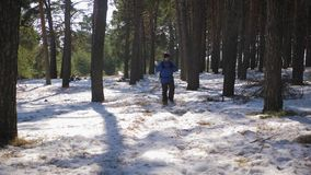 Hiker with backpack walking in the pine forest covered with deep snow. Winter activity and recreation concept. Hiker with backpack walking in the pine forest stock video