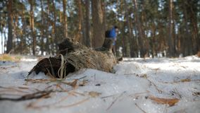 Hiker with backpack walking in the pine forest covered with deep snow. Winter activity and recreation concept. Hiker with backpack walking in the pine forest stock footage