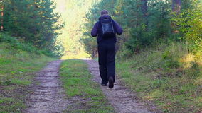 Hiker with backpack in the woods on trail stock video footage