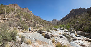 Hiker on Bear Canyon trail. Trail in Bear Canyon with hiker stock photo