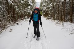 Hiker, with big backpack, is walking in snowshoes. Among huge pine trees covered with snow. Awesome adventure in winter wilderness Stock Photo
