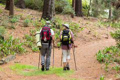 Hiker couple hiking in forest. Rear view of hiker couple hiking in forest Stock Images