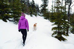 Hiker and dog, Karkonosze Mountains, Poland. Hiker in purple jacket hiking on snowy trails in Karkonosze Mountains, Poland with dog Royalty Free Stock Image