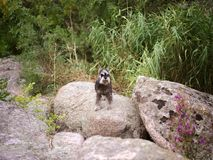 Hiker dog at the mountains. goal, success, freedom and achievement concept. stock photo