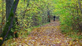 Hiker with dog in the park in autumn stock video footage